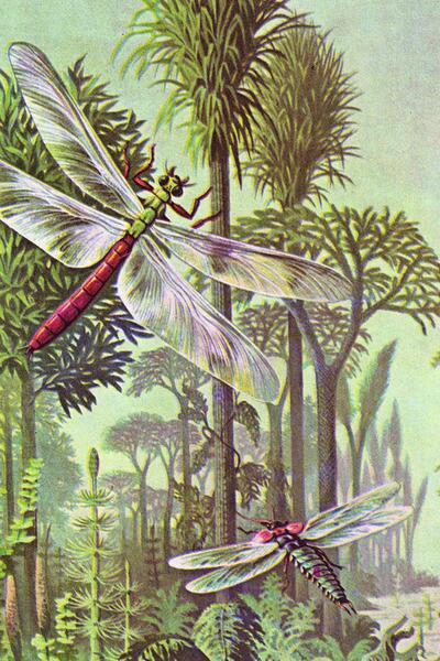 В каменноугольных лесах порхали такие гигантские стрекозы, как меганевра и палеодиктиоптера