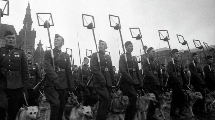 Саперы с собаками минно-розыскной службы проходят по Красной площади во время Парада Победы