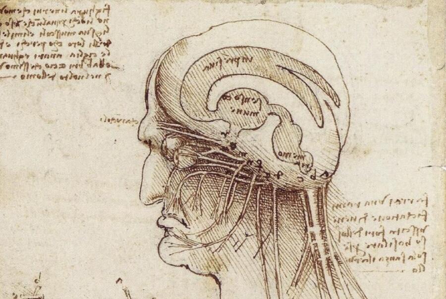 Леонардо да Винчие, «Исследование человеческого мозга» (фрагмент), 1508 г
