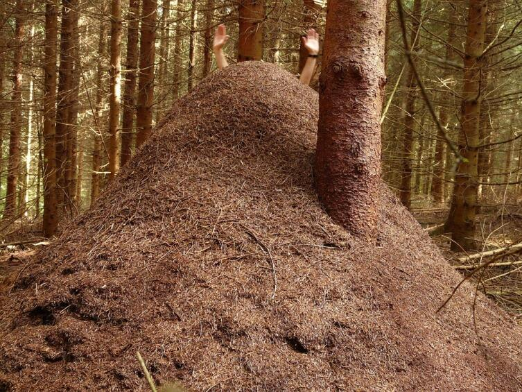Как живут муравьи?