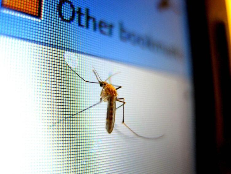 Что мы знаем о комарах? Подробности о тех, кого мы кормим