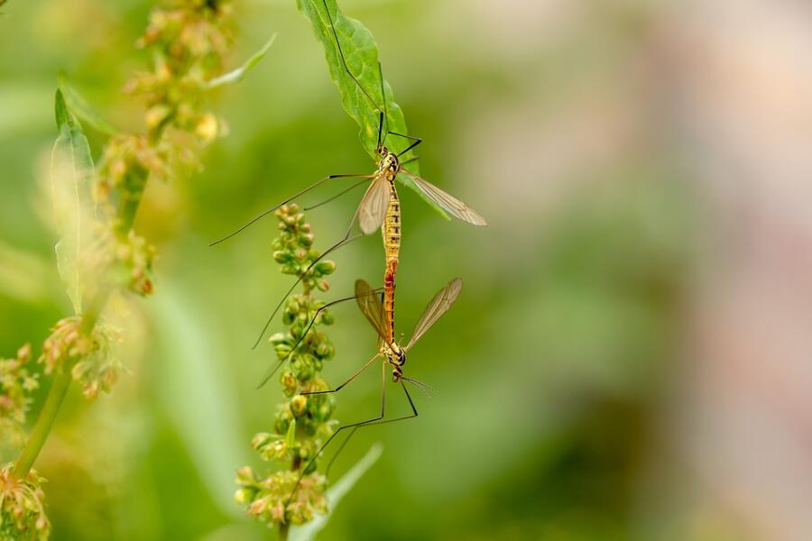 Что мы знаем о комарах? От комаров у нас есть...