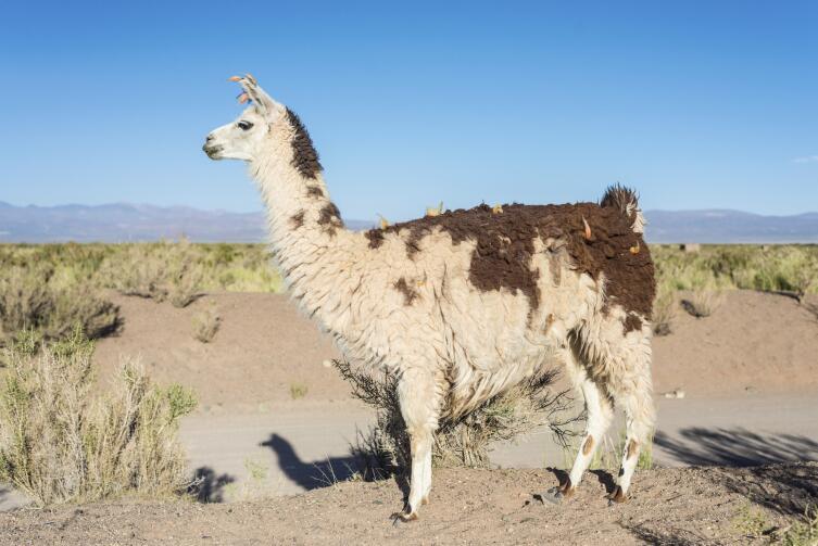 Салинас-Грандес. В какой пустыне нет песка?