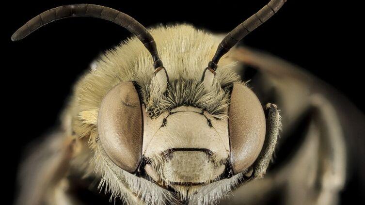 Как пчелы помогают Пентагону?
