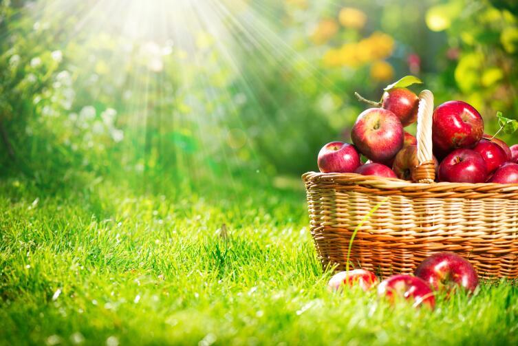 Какая часть яблока самая полезная?