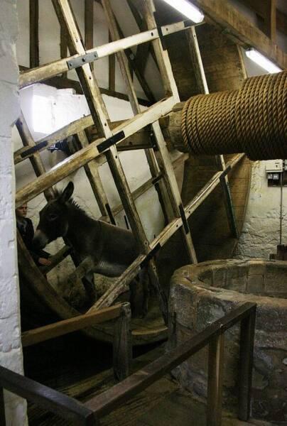 Осел добывает воду из колодца в замке Карисбрук на острове Уайт
