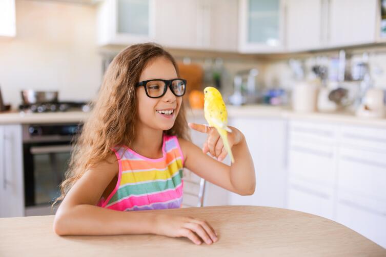 Как общаются попугаи? Особенности звуков