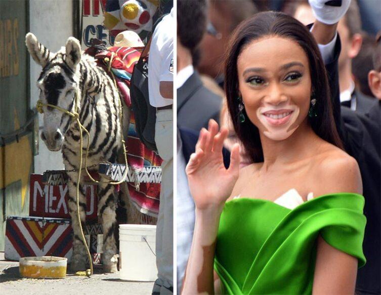 Слева— ослик-зонки. Справа— модель Винни Харлоу по прозвищу «девушка-зебра»