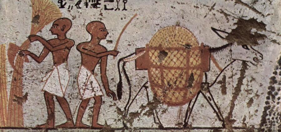 Гробница Панехси, жреца. Земледелец и груженный осел. 1298-1235 до н.э.