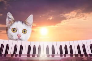 Кто живёт в стране Фантазёрии? Сказка о радужных музыкальных кошках