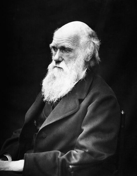 Что такое премия Дарвина?