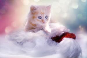 Где обожают кошек?