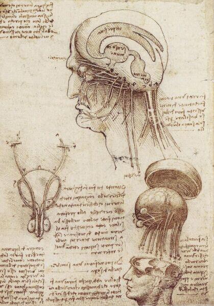 Леонардо да Винчи, «Исследование человеческого мозга», 1508 г.