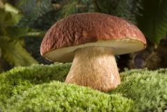 ...До сих пор идут споры на тему: грибы – это растения или животные?