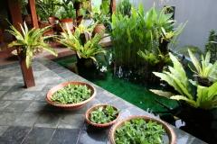Как уберечь комнатные растения в отопительный сезон?