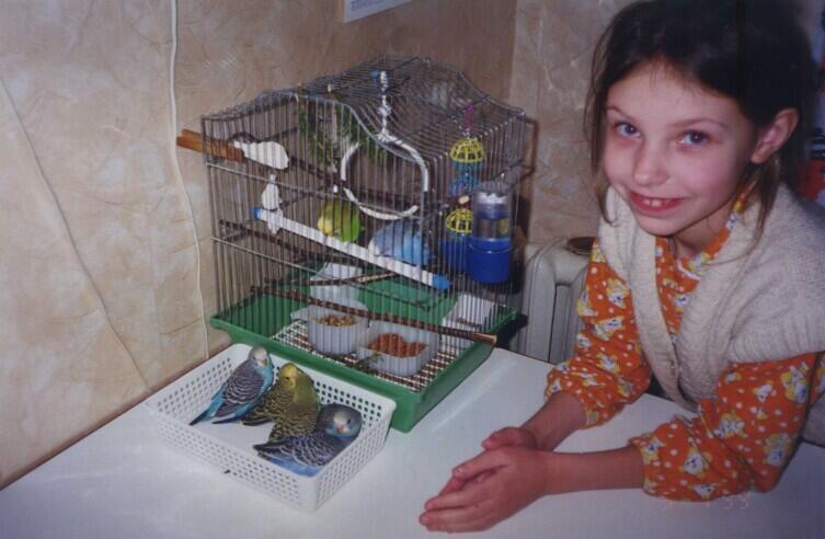 В клетке— Гоша и Кеша. В корзинке— птенцы, которых извлекли из гнезда для смены опилок