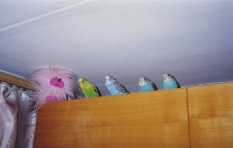 Учатся летать с мебельной стенки