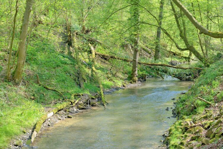 Река Дюссель в знаменитой долине неандертальца, Меттманн возле Дюссельдорф, Северный Рейн Вестфалия, Германия