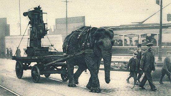 В Первой мировой войне слоны иногда служили тягловой силой. Этот слон работал на базе боеприпасов в Шеффилде