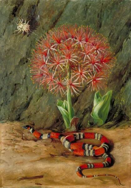 Марианна Норт, «Цветок империала, коралловая змея и паук, Бразилия», 1873 г.