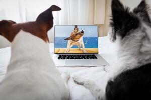 Где работает кинотеатр для собак и людей?