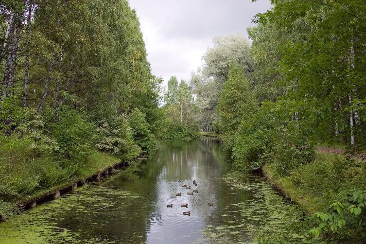 Путяевские пруды, парк Сокольники, Москва