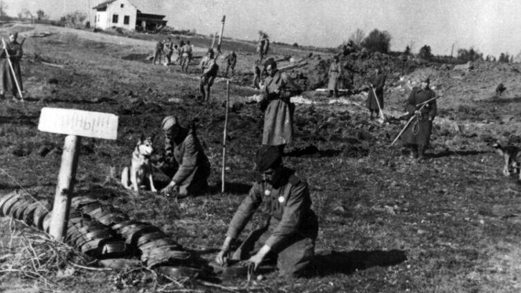 Советские саперы с собаками ведут разминирование
