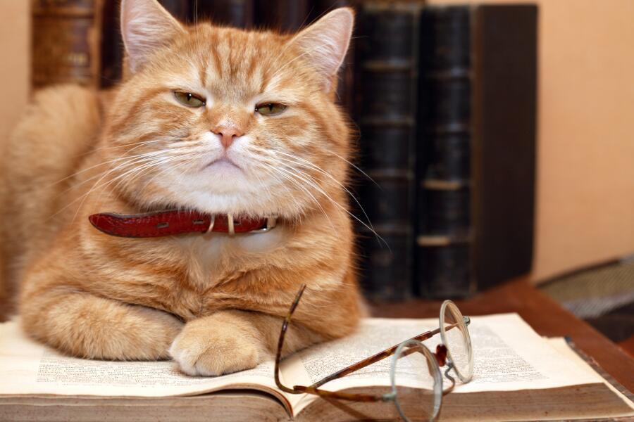 Разумны ли кошки?