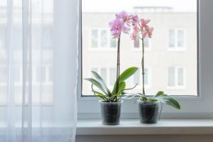 Какие комнатные растения цветут весь год?
