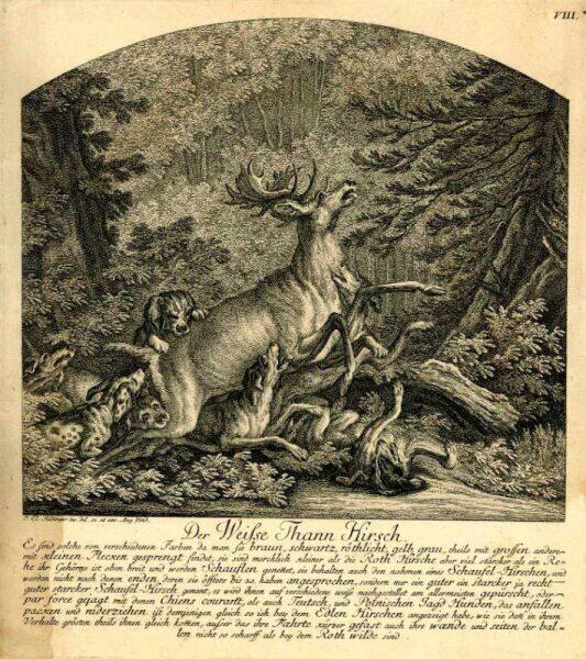 Как и зачем охотились на оленей?