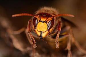 Как воевали насекомые? Интересные факты из истории войн