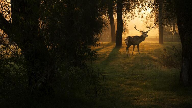 Тупой лох или «король леса»? Символика оленя