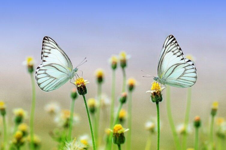 Отчего в животе бабочки летают? Новогодний тост