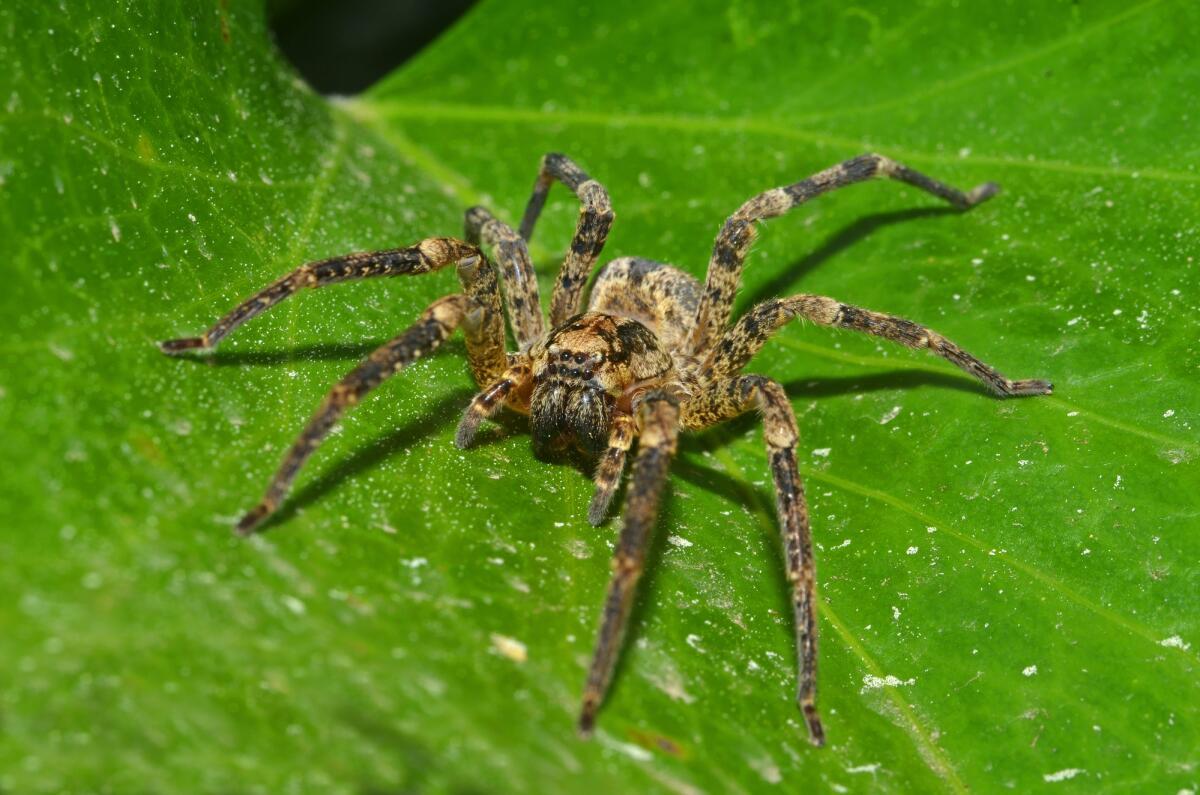Какие тайны скрывают пауки?