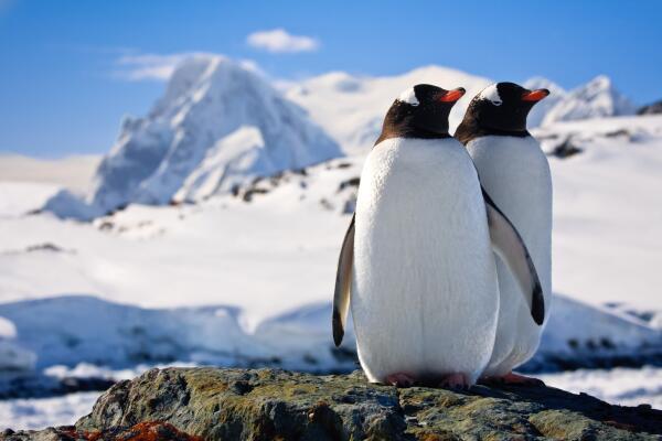 Какие катастрофы ожидать от тающей Антарктиды?