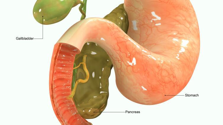 Область поджелудочной железы