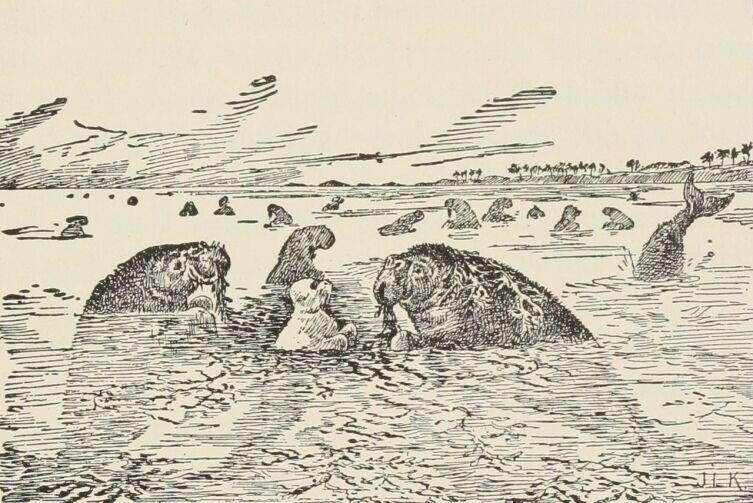 Иллюстрация к повести Р. Киплинга «Белый котик», изображающая морских коров (издание 1895 г.)