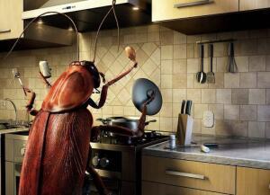 Уничтожение тараканов своими руками. Что для этого потребуется и чем опасны насекомые?