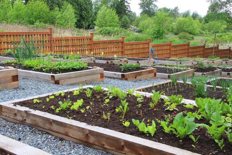 Как спланировать садовый участок?