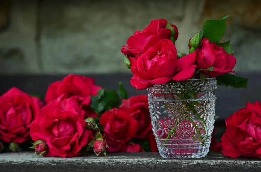 Как выращивают розы?