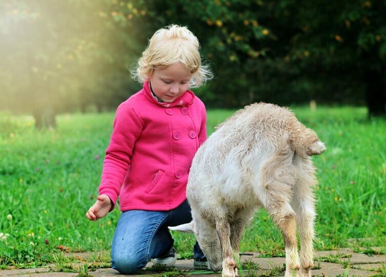 Зачем человеку нужна доброта?