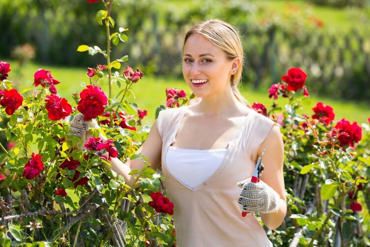 Какая почва нужна для роз?