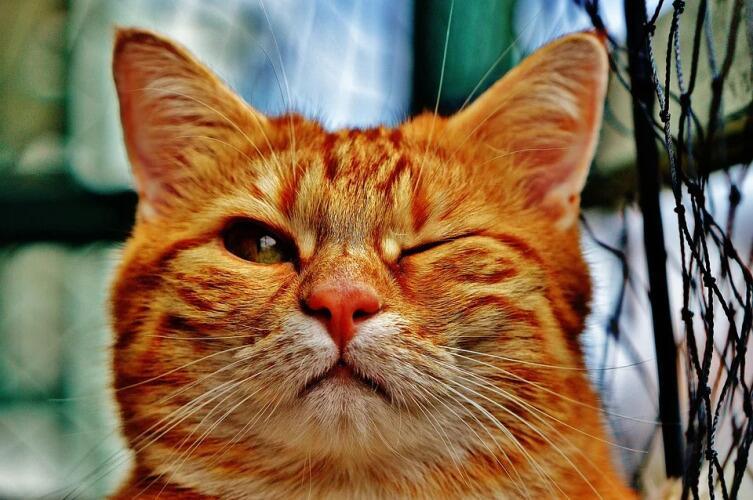 Чем полезен кот в городской квартире?