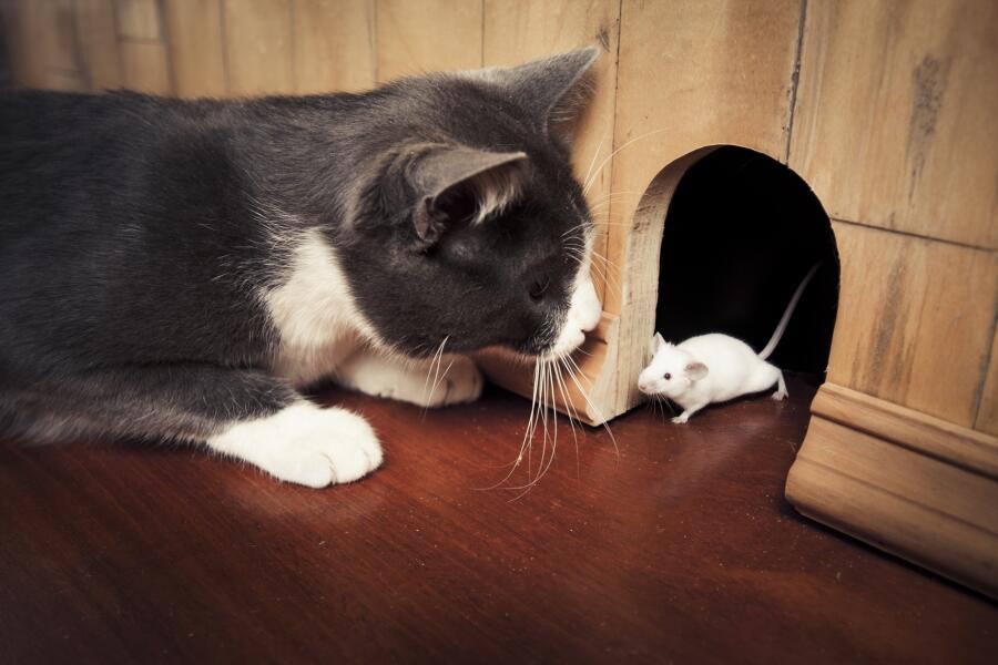 Как мышонок Тишка стал воздухоплавателем? Сказка