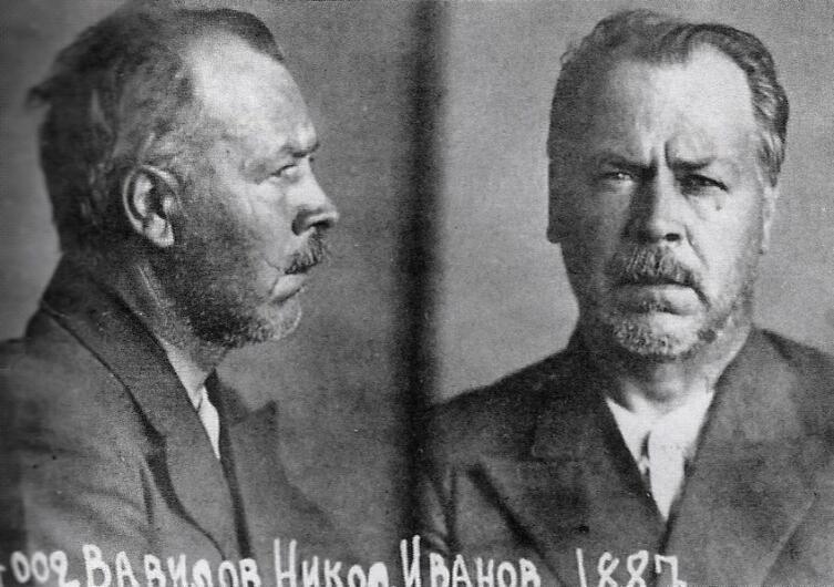 Тюремное фото Н. И. Вавилова