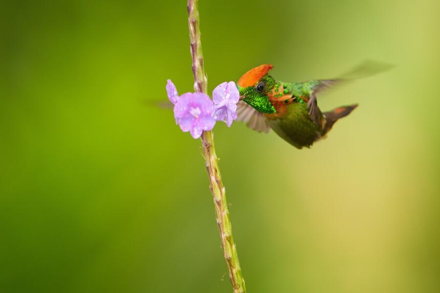 Какая птица самая модная?