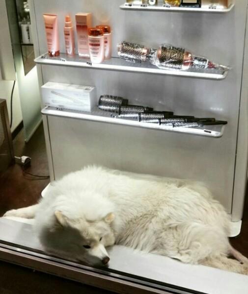 Стоит ли брать собаку в путешествие в Вену?