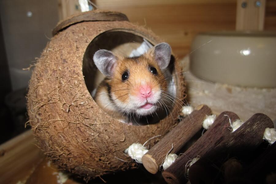 Какая клетка нужна для хомячка?