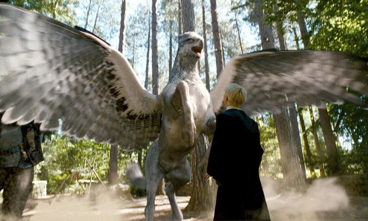 Гиппогриф. Кадр из кинофраншизы «Гарри Поттер»