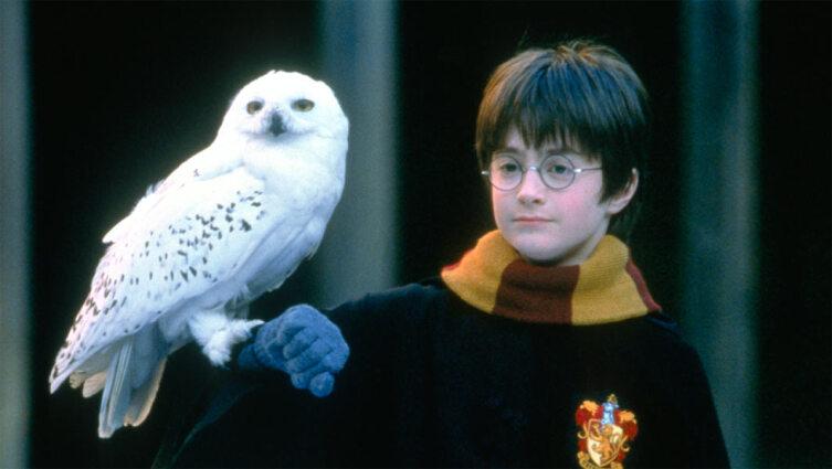 Гарри с совой Буклей. Кадр из кинофраншизы «Гарри Поттер»